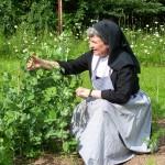 jardinage 2015 (2)